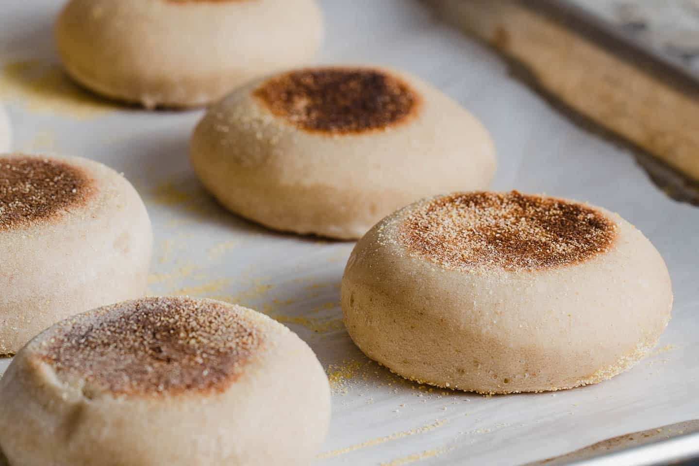 Cooked sourdough english muffins on a piece of parchment paper.
