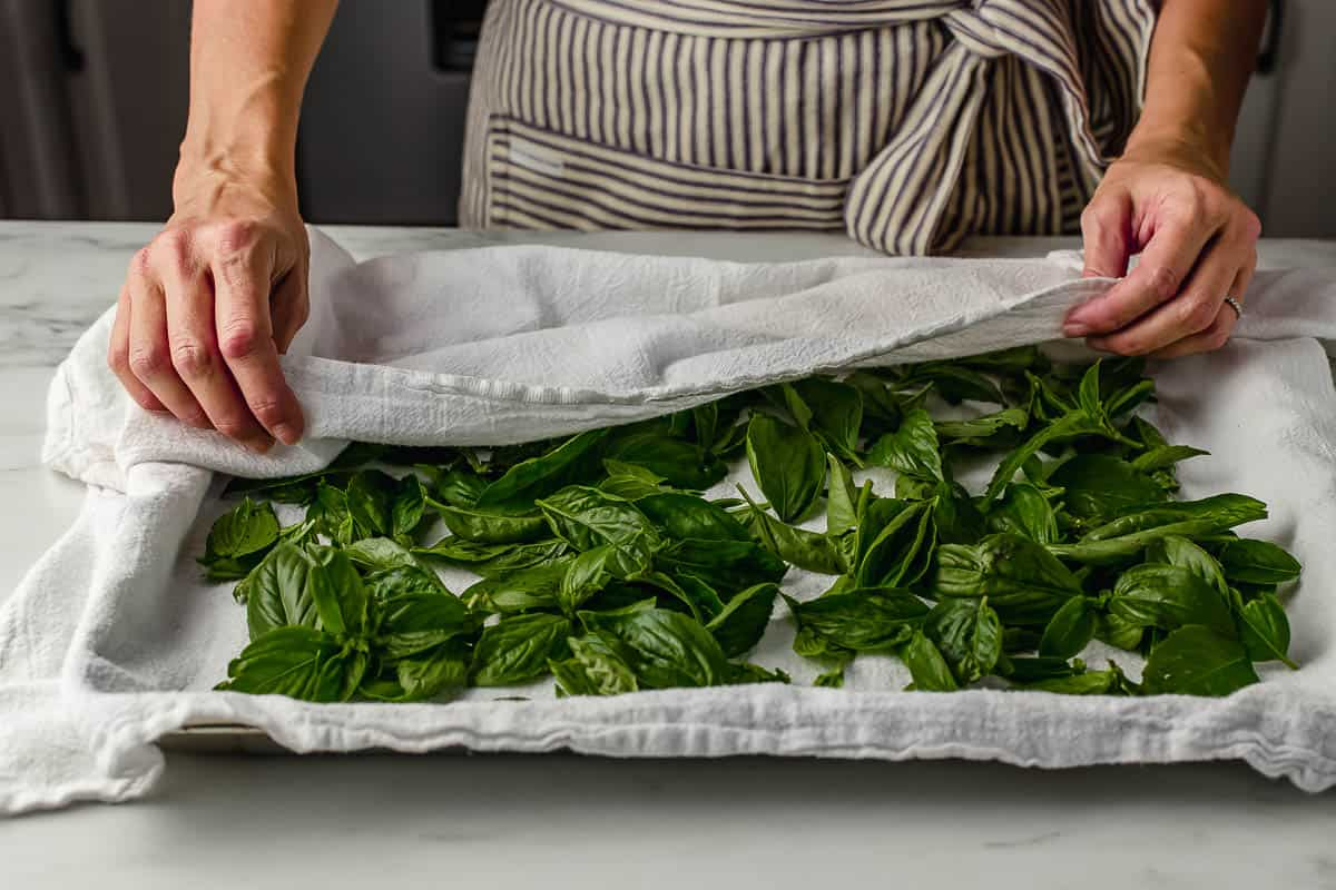 A woman drying basil leaves on a towel.